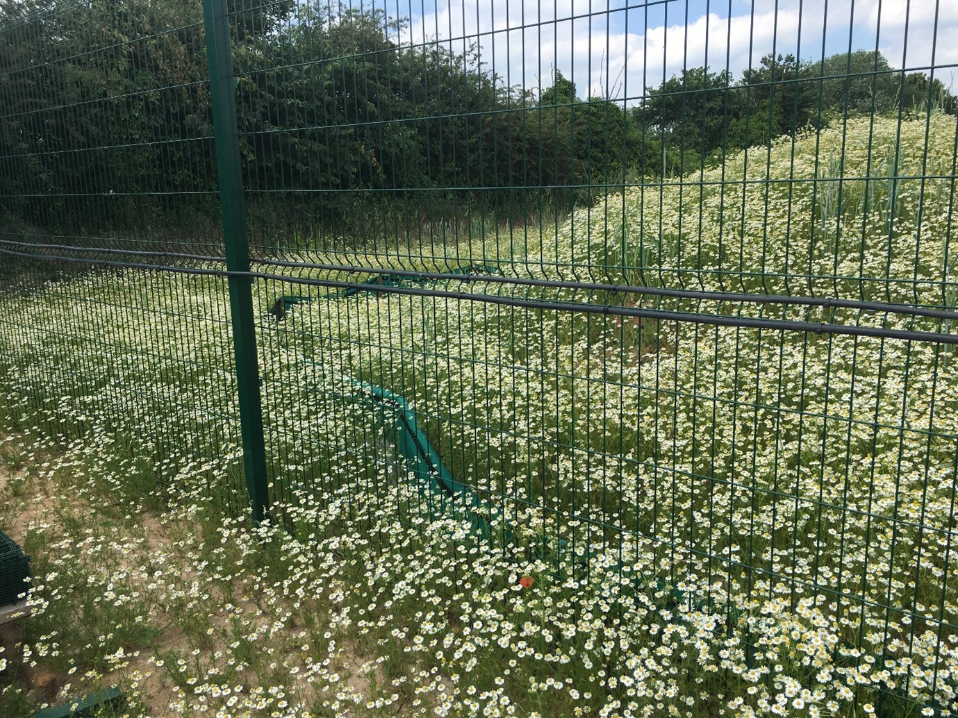 Junction improvement gives nature a helping hand image
